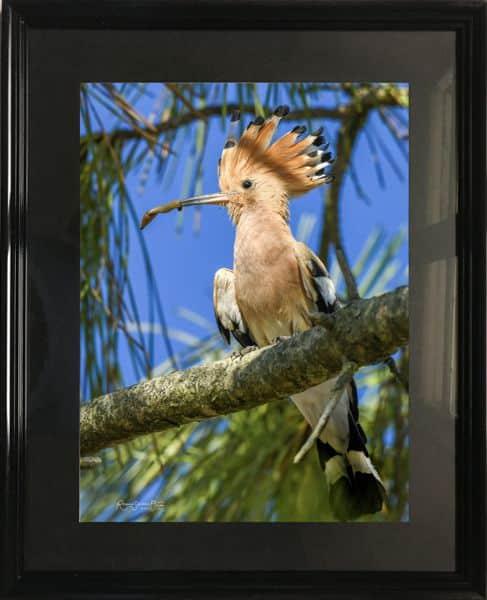 Cadre photo avec un oiseau