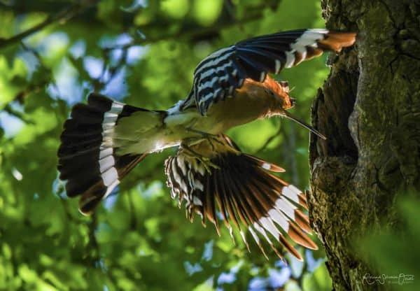 Technique d'observation des oiseaux